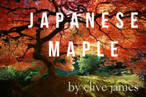 japanese-maple1