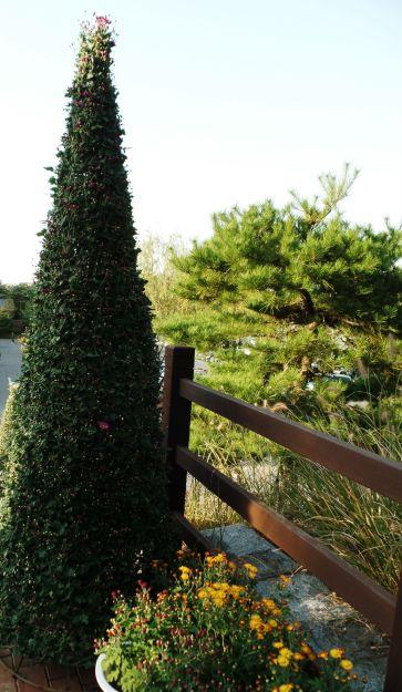 Daegu Park 4