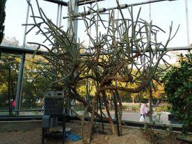 Daegu Park 9