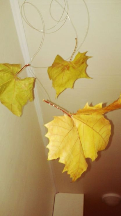 I used real, beautiful, giant leaves I can find in my neighborhood was decorations.
