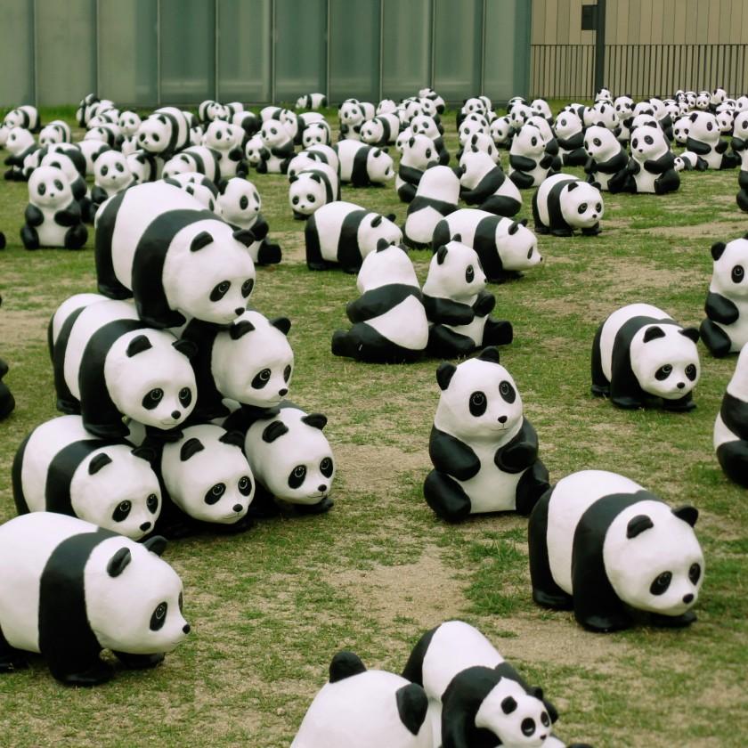 Panda Invasion 2