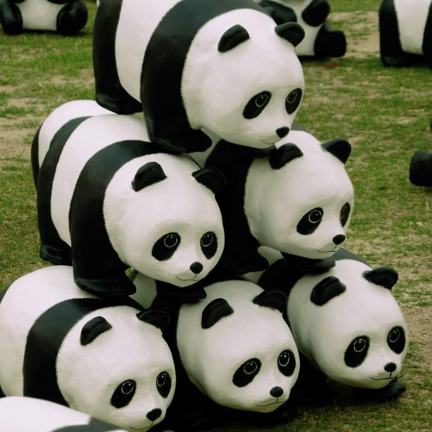 Panda Invasion 3