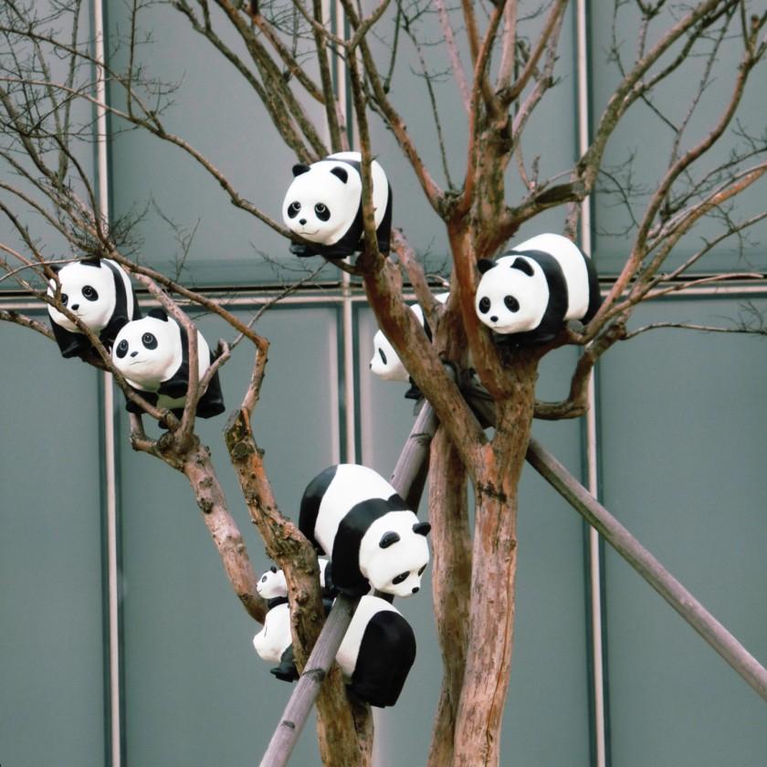 Panda Invasion 4