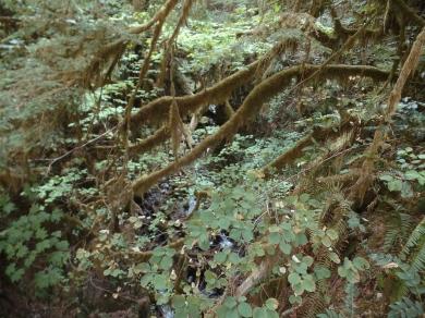 Eagle Creek Portland Hiking 4