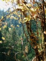 Portland Eagle Creek Hiking 4