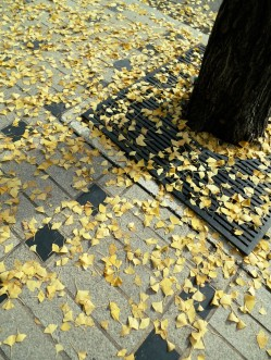 Autumn in Garosugil 2015 e