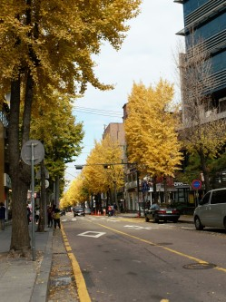 Autumn in Garosugil 2015