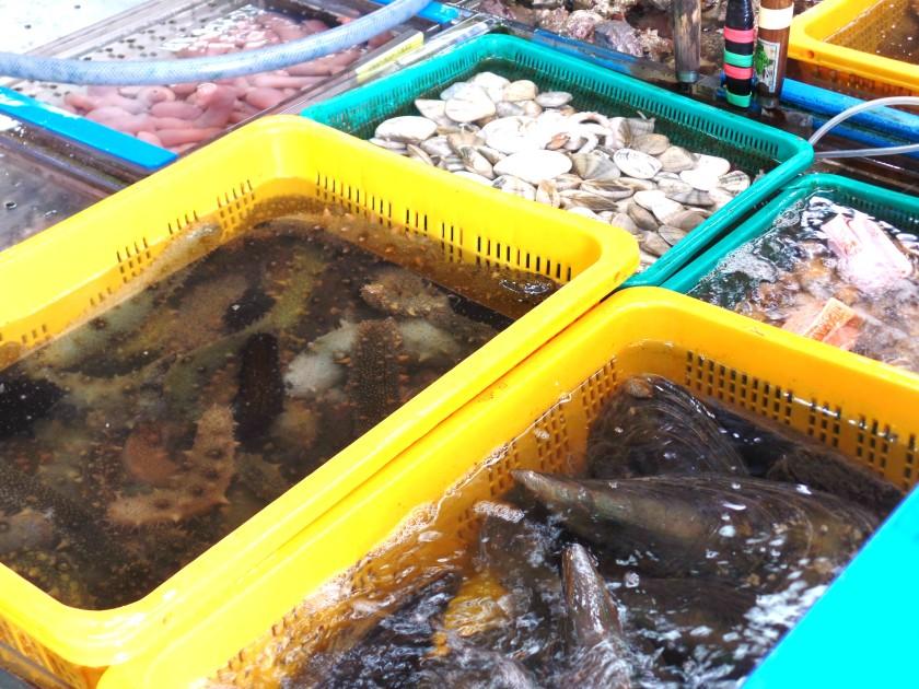 jagalchi-fish-market-010